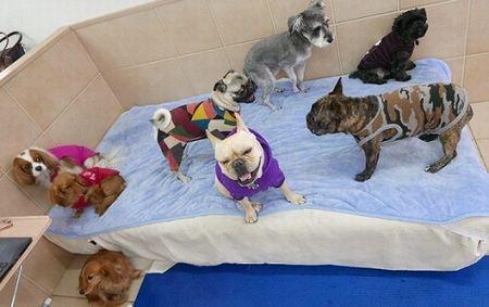 犬の保育園、そして整体